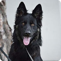 Adopt A Pet :: Quartz - Downey, CA