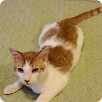 Adopt A Pet :: Simba, Speck, Cloe - Staten Island, NY