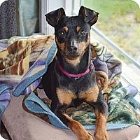 Adopt A Pet :: Axel - Sacramento, CA