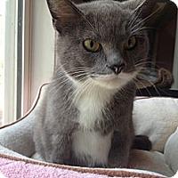 Adopt A Pet :: Phobie - Monroe, GA