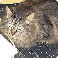 Adopt A Pet :: Tiger - Jeffersonville, IN