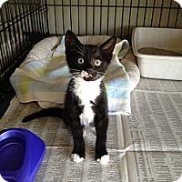 Adopt A Pet :: Newton - Island Park, NY