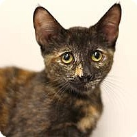 Adopt A Pet :: Cricket - Sacramento, CA