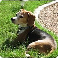 Adopt A Pet :: Pablo - Phoenix, AZ