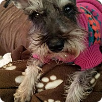 Adopt A Pet :: Woody - Springfield, MO