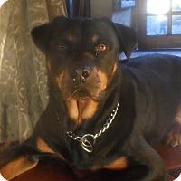 Adopt A Pet :: Sammy - San Diego, CA