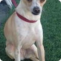 Adopt A Pet :: Francis - Phoenix, AZ
