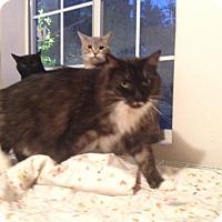 Adopt A Pet :: Mimi - Burbank, CA