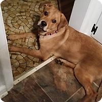 Adopt A Pet :: Brianna and Brady - Bardonia, NY