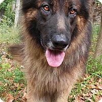 Adopt A Pet :: Koda - Louisville, KY