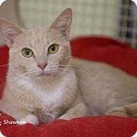 Adopt A Pet :: Shawnee - Merrifield, VA