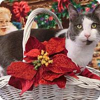 Adopt A Pet :: JOVE - New Cumberland, WV