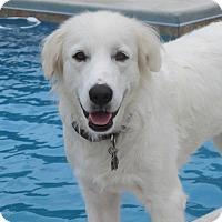 Adopt A Pet :: Storm - Tulsa, OK