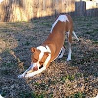 Adopt A Pet :: Petey - Snellville, GA
