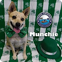Adopt A Pet :: Munchie - Arcadia, FL