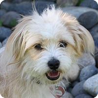 Adopt A Pet :: Gidget - Edmonton, AB