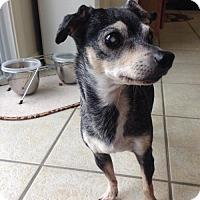 Adopt A Pet :: Etta James (I'm Blind) - Franklin, IN