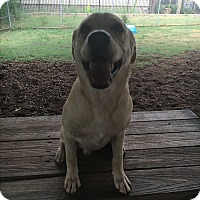 Adopt A Pet :: Hank - Homewood, AL