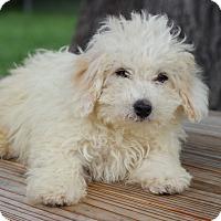 Adopt A Pet :: Dina - Waldorf, MD