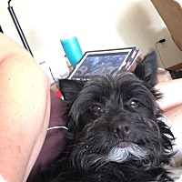Adopt A Pet :: Grimmie - Carey, OH