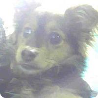 Adopt A Pet :: ROCKY - Louisville, KY