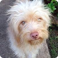 Adopt A Pet :: Boyce - Aurora, CO