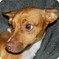 Adopt A Pet :: Syrus - Umatilla, FL