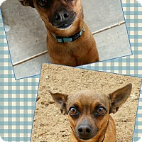 Adopt A Pet :: Cisco - Edwards AFB, CA