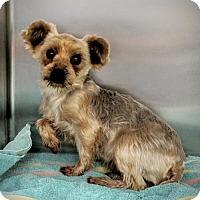 Adopt A Pet :: Finley - Newark, DE