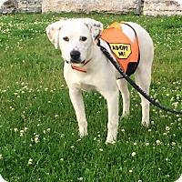 Adopt A Pet :: Alice - Tonawanda, NY