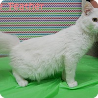 Adopt A Pet :: White Feather - Bucyrus, OH
