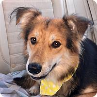 Adopt A Pet :: Boris - San Diego, CA