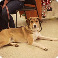 Adopt A Pet :: Lucky-Adoption Pending - Thorp, WI