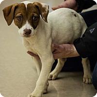 Adopt A Pet :: Cooper - Hillside, IL