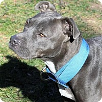 Adopt A Pet :: Sweetness - Fairfax, VA