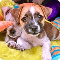 Adopt A Pet :: Frisco - Lansing, MI