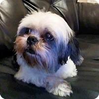 Adopt A Pet :: Oreo - Windermere, FL