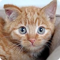 Adopt A Pet :: Oscar C160414: NO LONGER ACCEPTING APPLICATIONS - Edina, MN