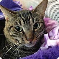Adopt A Pet :: Maddox - Sarasota, FL