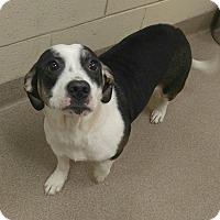 Adopt A Pet :: 1-3 Huey - Triadelphia, WV