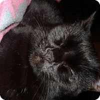 Adopt A Pet :: Snow White - Rockford, IL