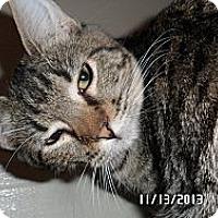 Adopt A Pet :: Tigger - Courtesy Posting - Gilbert, AZ