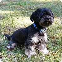 Adopt A Pet :: Tuffy - Mocksville, NC