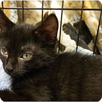 Adopt A Pet :: Zippers - The Colony, TX