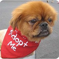 Adopt A Pet :: Colby-NJ - Mays Landing, NJ