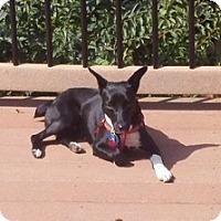 Adopt A Pet :: Pamela - Seymour, CT