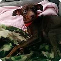 Adopt A Pet :: Raisin Cain - Columbus, OH