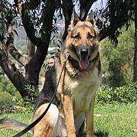 Adopt A Pet :: Maddox - Laguna Niguel, CA