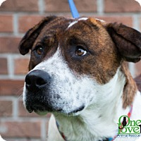 Adopt A Pet :: Janus - Savannah, GA