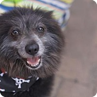Adopt A Pet :: Smokey - Brookfield, WI